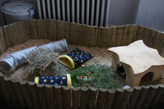 garage meerschweinchen haltung seite 2. Black Bedroom Furniture Sets. Home Design Ideas
