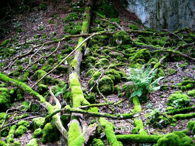 unterschied urwald regenwald