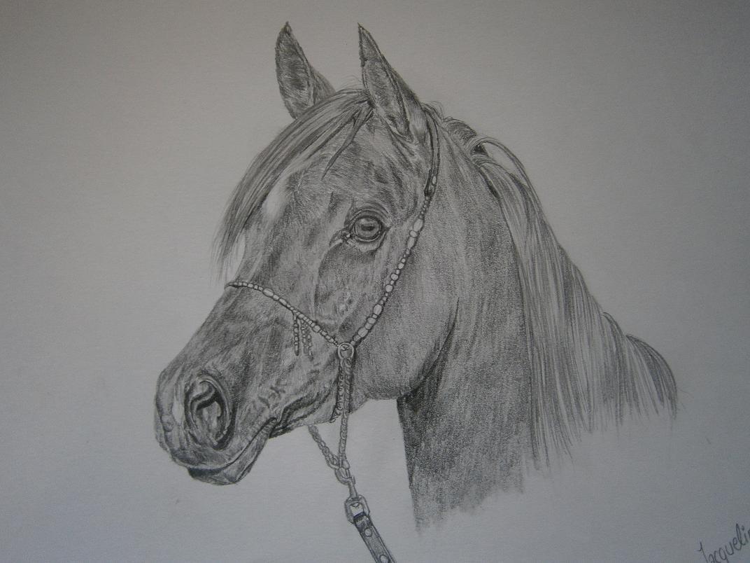 pferde zeichnen mit bleistift lernen ber ideen zu pferde. Black Bedroom Furniture Sets. Home Design Ideas