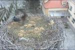 http://www10.pic-upload.de/thumb/04.03.12/ugsoho4247h9.jpg