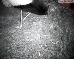 http://www10.pic-upload.de/thumb/05.04.12/l1953dvyxowm.jpg