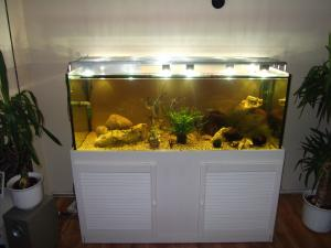 beleuchtung f r 150cm becken seite 5 aquarium forum. Black Bedroom Furniture Sets. Home Design Ideas